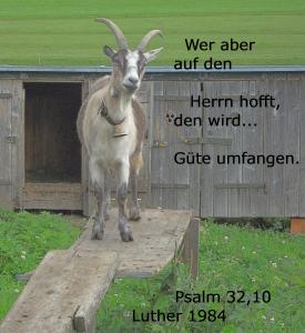 Den ganzen Psalm lesen, um mehr zu erfahren.
