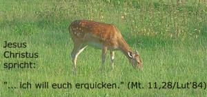 Reh-erquicken-Mt.11,28