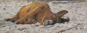 Esel im Zoo (Wilhelma Stuttgart)