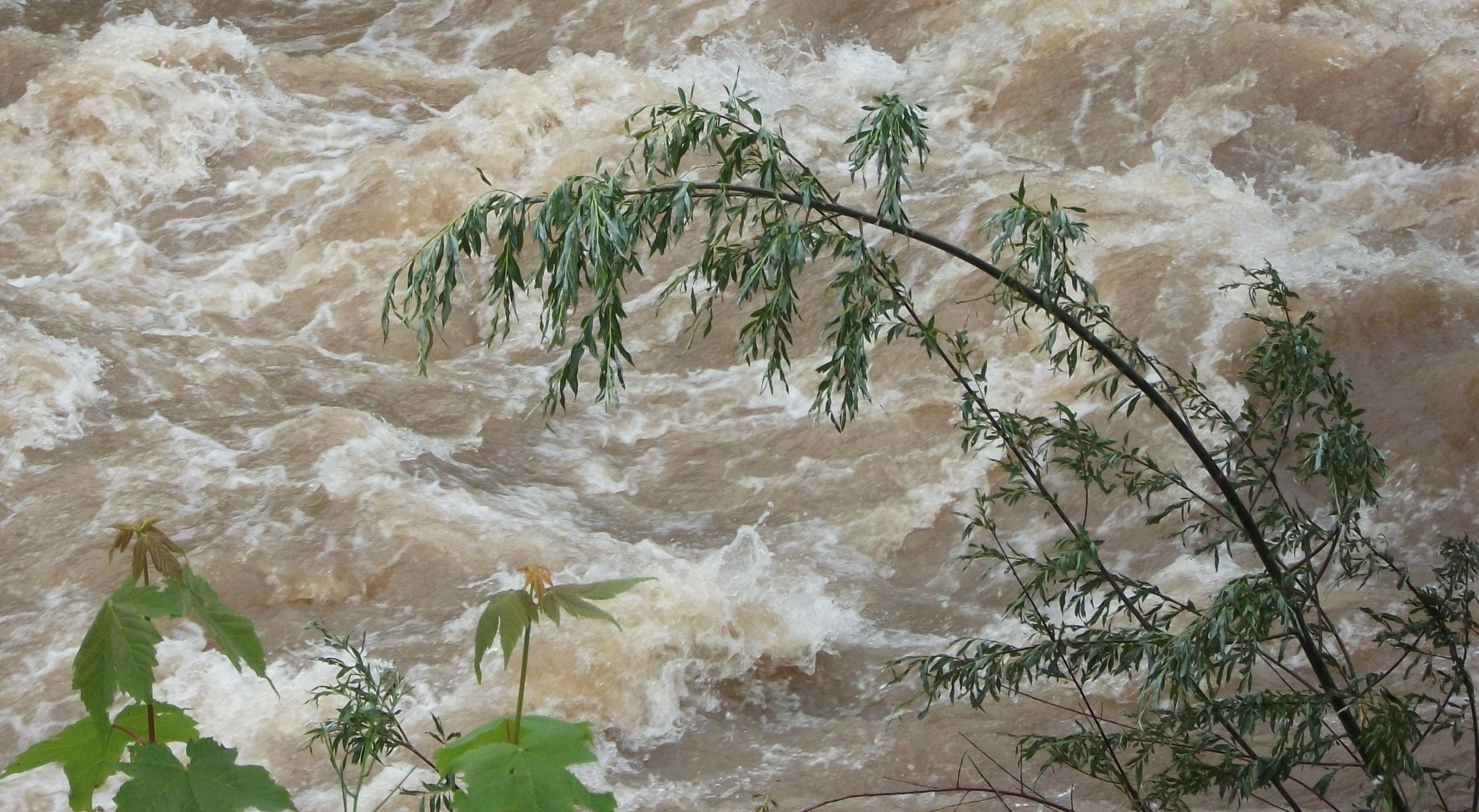 """murr und entchen 2 6 13 002mop - """"Lebendiges Wasser"""" - nicht nur für uns selbst"""