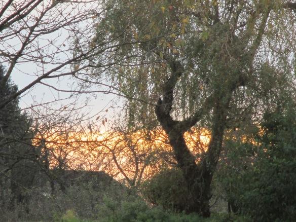 Herbstbilder 9.11.14 020