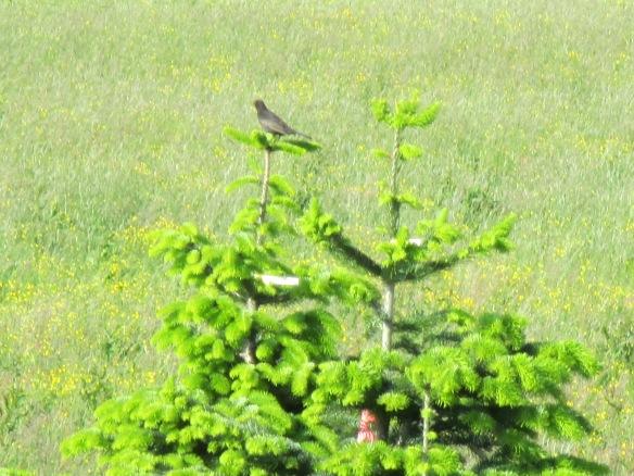 kleine Vögel, Blüten 014